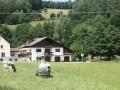 Ferienwohnung mit Kuh